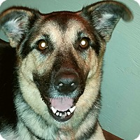 Adopt A Pet :: Molly Hatchet - Newport, KY