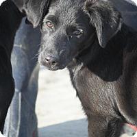 Adopt A Pet :: Pecan - Hooksett, NH