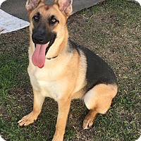 Adopt A Pet :: Deacon - Adoption Pending - Houston, TX