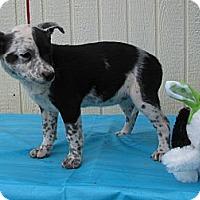 Adopt A Pet :: Paloma - Humboldt, TN