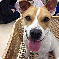 Adopt A Pet :: Lenny - MAIDEN, NC