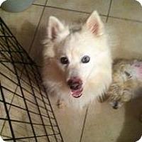 Adopt A Pet :: Kasey - Las Vegas, NV