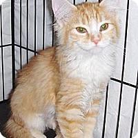 Adopt A Pet :: Polly - Phoenix, AZ