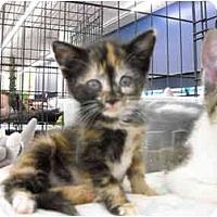 Adopt A Pet :: Emma - Riverside, RI