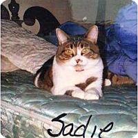 Adopt A Pet :: Sadie - Mobile, AL