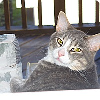 Adopt A Pet :: Sponsor Leonard - Halifax, NS