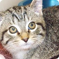 Adopt A Pet :: Vincenzo - Westville, IN