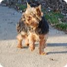 Adopt A Pet :: Libby Boy