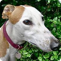 Adopt A Pet :: Shirley - Spencerville, MD