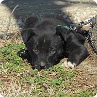 Adopt A Pet :: DRAKE - Hartford, CT