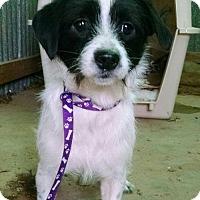 Adopt A Pet :: Sundance - Houston, TX