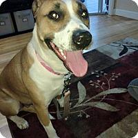 Adopt A Pet :: Sabel - Eastpointe, MI