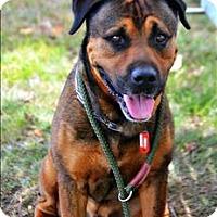 Adopt A Pet :: Al Capone - Cleveland, TN