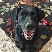 Adopt A Pet :: Cupid - Brattleboro, VT