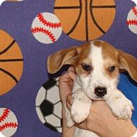 Adopt A Pet :: Carter - Oviedo, FL