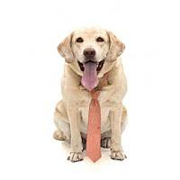 Adopt A Pet :: ROSCOE - Orlando, FL
