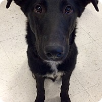 Adopt A Pet :: Sammy in CT - Manchester, CT