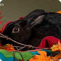 Adopt A Pet :: FERN - Santa Fe, NM