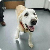 Adopt A Pet :: Hunter #7 - Falls Church, VA