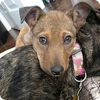 Adopt A Pet :: Mhiri - Salt Lake City, UT