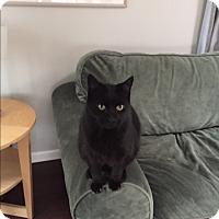 Adopt A Pet :: Slippers - Novato, CA