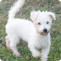 Adopt A Pet :: Polo - Flanders, NJ