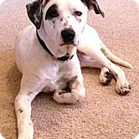 Adopt A Pet :: Hurley (Assisted Placement) - Newcastle, OK
