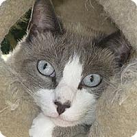 Adopt A Pet :: Buddha - Brea, CA