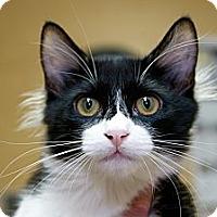 Adopt A Pet :: Karuna - Irvine, CA