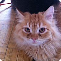 Adopt A Pet :: Tigger - Toronto, ON