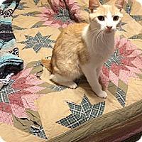 Adopt A Pet :: Toby - Simpsonville, SC