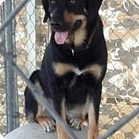 Adopt A Pet :: MOONA - Henderson, KY