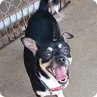 Adopt A Pet :: Ringo - Oberlin, OH