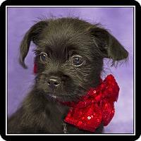 Adopt A Pet :: Carson - San Dimas, CA