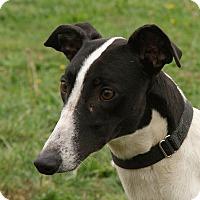 Adopt A Pet :: Daisy II - Portland, OR