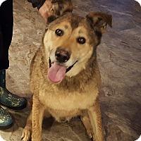 Adopt A Pet :: Jerry - Bend, OR