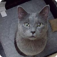 Adopt A Pet :: Darby - Berkeley Hts, NJ