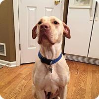 Adopt A Pet :: Ruby - Davison, MI