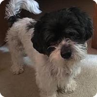 Adopt A Pet :: Gladys - Richmond, VA