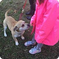 Adopt A Pet :: Calhoun - Bloomfield, CT