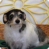 Adopt A Pet :: Pickles - Brunswick, ME