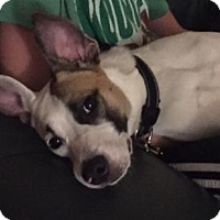 Adopt A Pet :: Pepper (was Holly) - Oakhurst, NJ