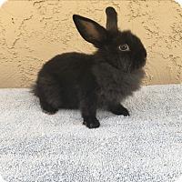 Adopt A Pet :: Coal - Bonita, CA
