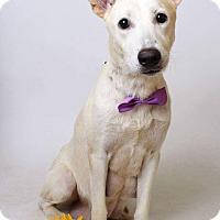 Adopt A Pet :: Livvy - Luling, LA