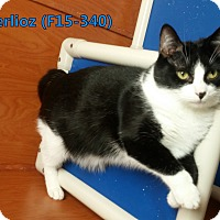 Adopt A Pet :: Berlioz - Tiffin, OH
