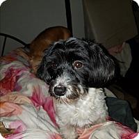 Adopt A Pet :: Stevie - Detroit, MI