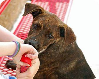 Plott Hound Mix Puppy for adoption in Springtown, Texas - Skippy