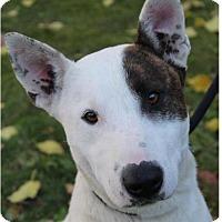 Adopt A Pet :: DWIGHT - Red Bluff, CA