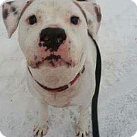 Adopt A Pet :: Rocky - Anchorage, AK