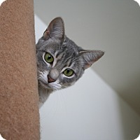 Adopt A Pet :: Sylvia - Richmond, VA
